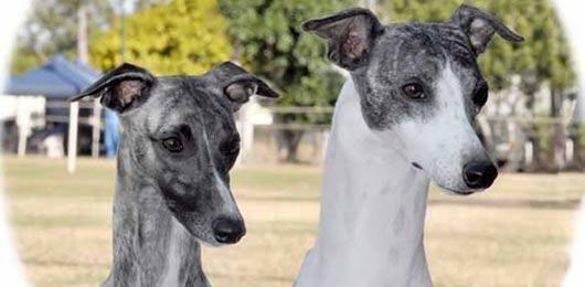 Tamil Nadu Dogs Price List